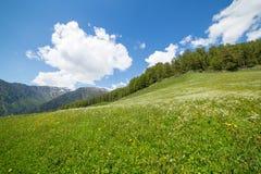 山的Grean草甸 库存图片