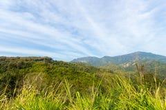 山的Grean草甸 免版税图库摄影