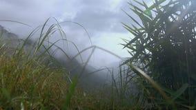 山看法在薄雾的 股票视频