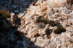 山石头在一个热的夏天 库存照片