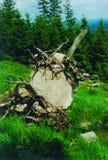 山石结构树 库存图片