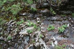 山石头和青苔 库存照片