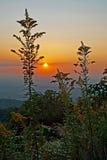 山种植剪影日落高tn 库存图片