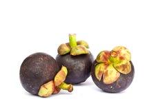 山竹果树作为一个热带水果 免版税图库摄影