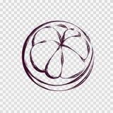 山竹果树果子剪影 向量例证
