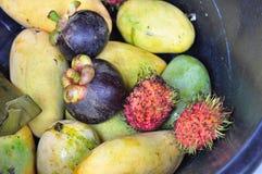 山竹果树芒果和红毛丹 免版税库存图片