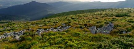 山绿色山谷在喀尔巴阡山脉 免版税库存照片