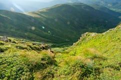 山绿色山谷在喀尔巴阡山脉 免版税库存图片