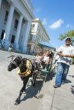 山羊乘坐圣克拉拉古巴 免版税库存图片