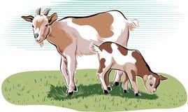 山羊和孩子 图库摄影