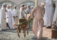 山羊和牛拍卖在尼兹瓦 图库摄影