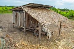山羊和猪房子由木头制成 免版税图库摄影