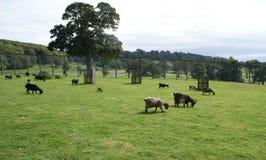 山羊在一个动物园、徒步旅行队或者一个徒步旅行队公园里在英国 免版税库存图片
