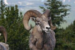 山羊山 免版税图库摄影