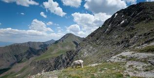 山羊山 库存照片
