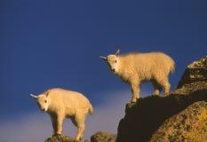 山羊开玩笑山孪生 库存照片