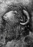 山羊或公羊与大垫铁画象 库存图片