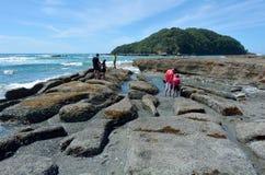 山羊海岛新西兰 免版税库存照片