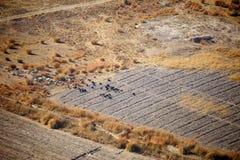 山羊牧群在阿富汗 免版税库存照片