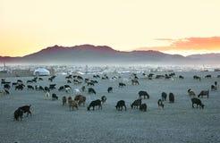 山羊牧群 免版税库存照片