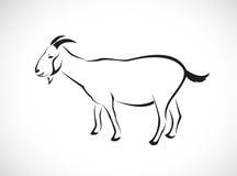 山羊的传染媒介图象 库存照片