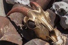 山羊头骨被绘的金子颜色 库存照片