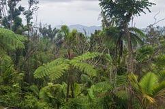 山脉中央山麓小丘的云彩森林 库存照片