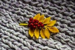 山脉灰的秋天枝杈在他的手上在软的温暖的地毯 免版税库存照片