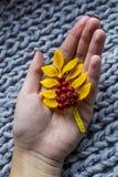 山脉灰的秋天枝杈在他的手上在软的温暖的地毯 免版税库存图片