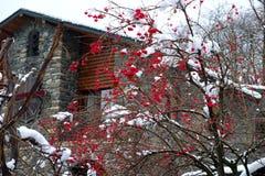 山脉灰红色莓果在雪下的 免版税库存图片
