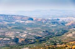 山脉科多巴的橄榄树小树林 图库摄影
