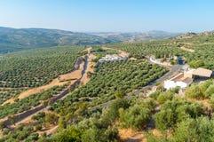 山脉科多巴的橄榄树小树林 免版税库存照片