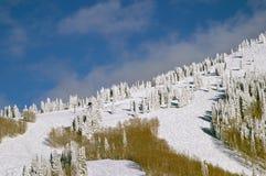 山腰多雪的结构树 免版税库存照片