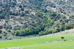 山腰槭树 免版税图库摄影