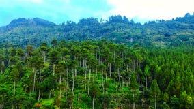 山腰的一个绿色豪华的森林 库存图片
