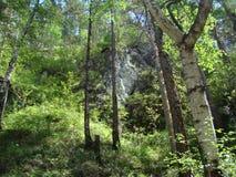 山腰的森林 免版税图库摄影