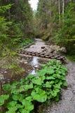 山自然蓝天木头覆盖雪河反射湖 免版税图库摄影