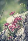 山花草甸在夏天 免版税库存图片
