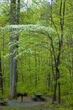 山茱萸国家公园smokies结构树 库存图片