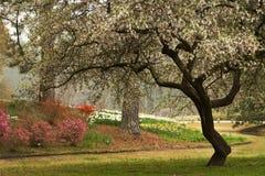 山茱萸开花的横向南部的春天 库存图片