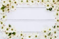 山茱萸开花背景 库存照片