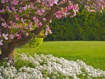 山茱萸横向结构树 免版税库存照片