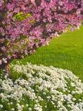 山茱萸横向结构树 库存照片