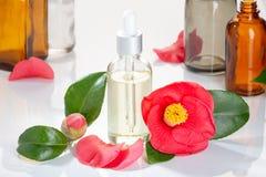 山茶花油有山茶花japonica花的玻璃瓶 免版税库存图片