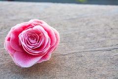 山茶花,在石头,关闭的开花的花蕾,五颜六色和生动的植物,自然本底模板 免版税库存图片