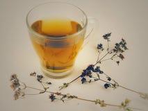 山茶ina每杯子 库存图片