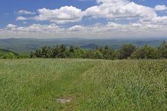 山草甸在一个晴天 免版税库存照片