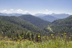 山草甸在巴法力亚前阿尔卑斯 免版税图库摄影