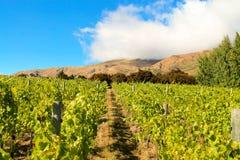 山葡萄园Otago,新西兰 免版税库存图片