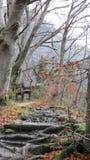 山行迹和长凳 库存图片